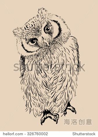 猫头鹰手绘,黑白孤立的矢量图 - 动物/野生生物,自然