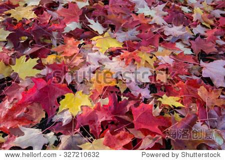 秋天的落叶-自然-海洛创意正版图片,视频,音乐素材-.