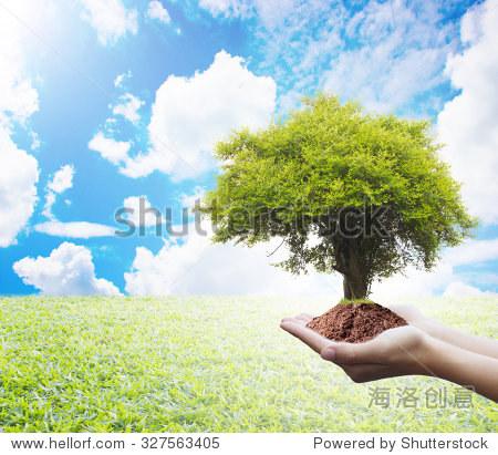 保护森林,植物树:树与自然抽象背景.生态学的概念.