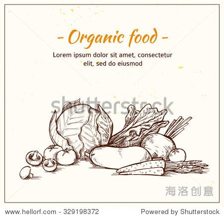 手绘矢量插图新鲜蔬菜.超市.杂货店.有机和纯素食食物