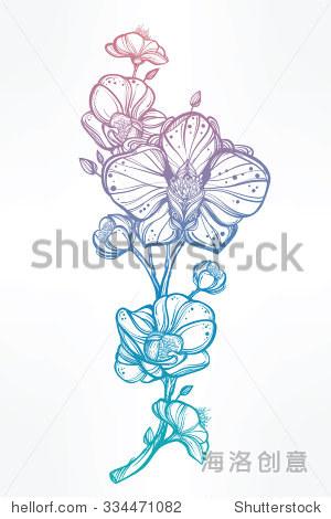 古董花非常详细手绘兰花花茎味蕾和花瓣 美丽的图案,纹身设计元素 概念艺术的书 孤立的矢量插图艺术风格相一致 自然,符号 标志 站酷海洛创意正版图片,视频,音乐素材交易平台