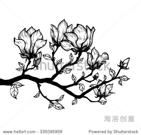 木兰开花树枝.花卉雕刻.向量的花.手绘艺术作品.