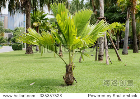 small palm trees also need well-maintained.