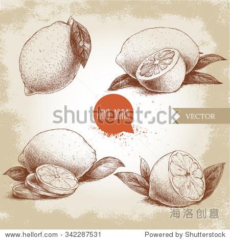 手绘草图风格的柠檬水果和树叶和柠檬片.复古的矢量插图.