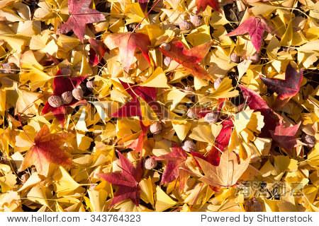 秋天的落叶-假期,自然-海洛创意正版图片,视频,音乐-.