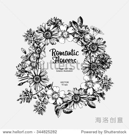 刻手绘插图的洋甘菊,玫瑰果,矢车菊,夹竹桃.花蕾,叶子