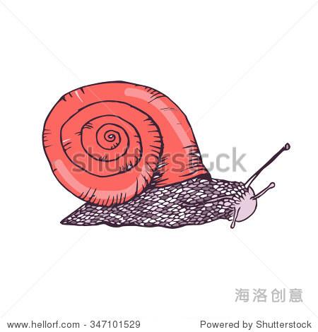 彩色手绘蜗牛
