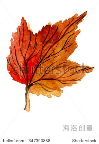水彩画水彩画画手绘插图的秋季美丽的金色雪球树叶落干鲜橙色白色背景