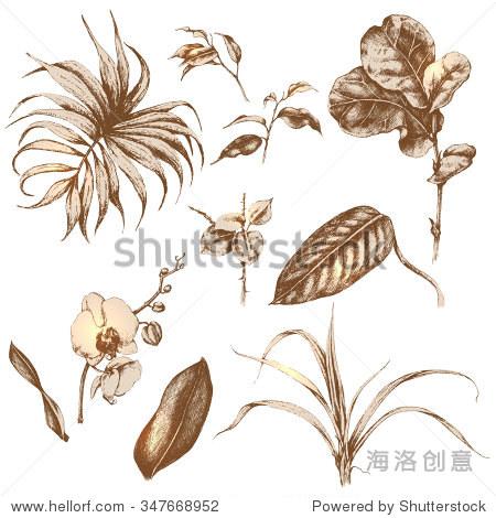 手绘热带植物的树枝和树叶.