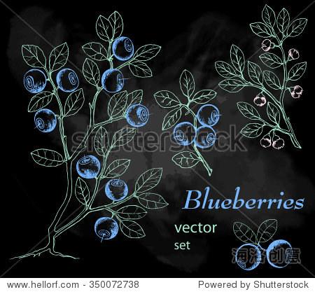 蓝莓.墨水手绘插图.野生浆果.黑板背景.