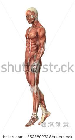 三维数字地图渲染图与肌肉男孤立在白色背景