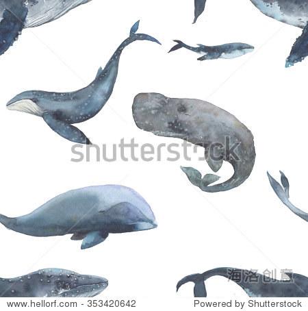 手画海洋哺乳动物壁纸在白色背景上