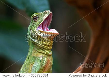 可爱的绿色蜥蜴开口行动(中国龙水)