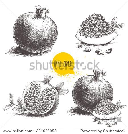 手绘石榴,石榴种子和树叶.素描风格矢量插图.有机食品