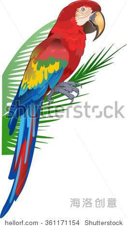 矢量图的红色鹦鹉鹦鹉.