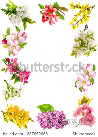 苹果树花,樱桃树枝,梨,连翘,淡紫色.春天的花朵孤立在