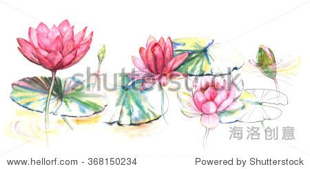 手绘水彩插图的粉色荷花在河里和树叶.日本风格的画在