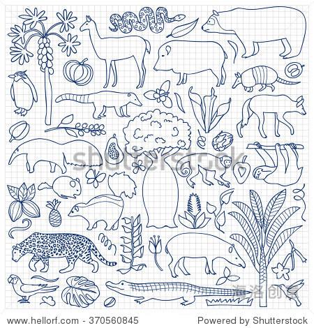 手绘南美.矢量插图与南美动物和植物在方格纸上