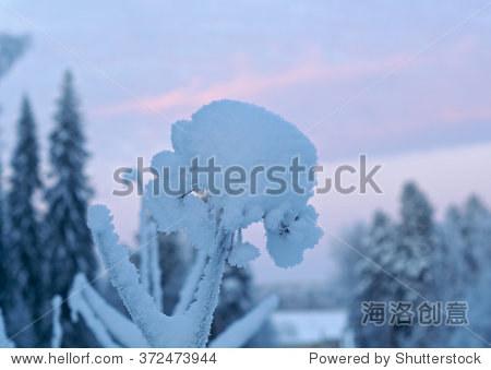 冬天的风景.冬天的雪花