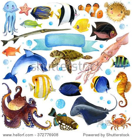 海洋鱼类水彩集不同寻常的海洋动物.水彩海洋主题.