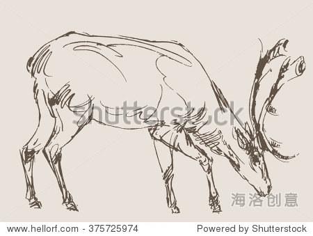 鹿向量,手绘草图-动物/野生生物,复古风格-海洛创意