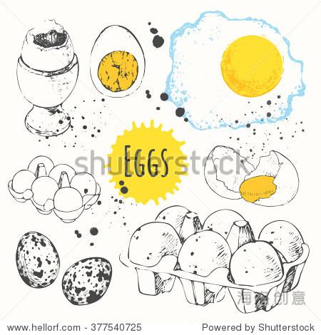 鸡和鹌鹑蛋.手绘的食物.新鲜的有机食品