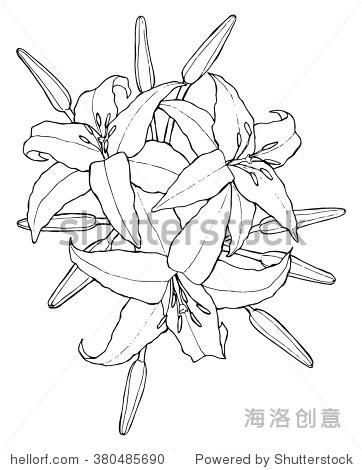 黑白手绘插画的百合花.对于成人和儿童彩色书页面.