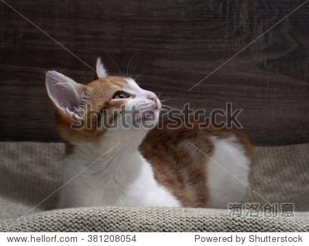 在猫的微笑在脸上,好心情