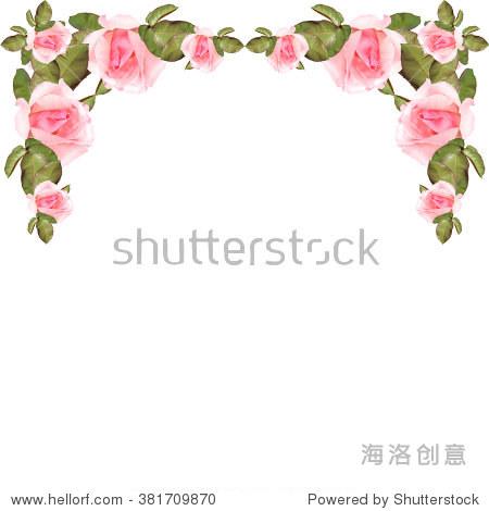 玫瑰花朵.孤立的