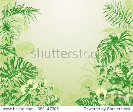 手绘热带植物的树枝和树叶.天然的绿色背景,热带植物.