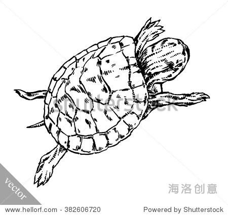 刻墨水画乌龟插图