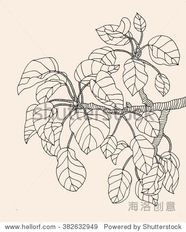 森林木兰树枝树叶.向量雕刻.手绘艺术作品.爱波西米亚