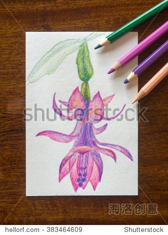 仙人掌花.用彩色铅笔画图