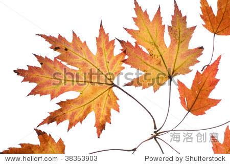 秋天的落叶-物体,自然-海洛创意正版图片,视频,音乐-.