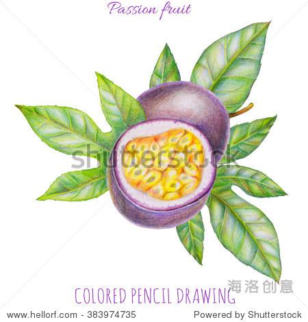 手绘插图的激情水果,切片和叶孤立在白色背景.