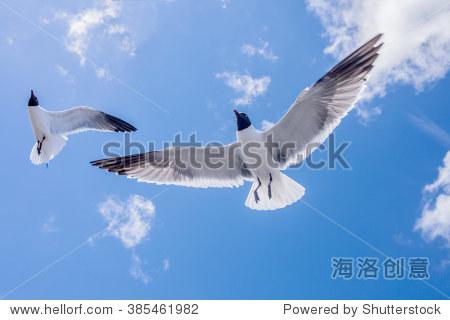 美丽的海鸥飞翔在蓝天