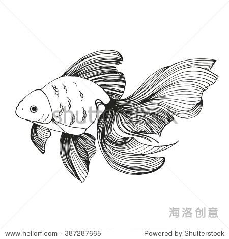 金鱼图片简笔画