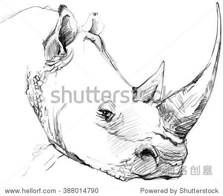 犀牛铅笔素描.-动物/野生生物,艺术-站酷海洛,,.
