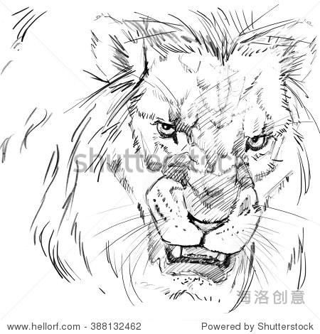 狮子素描.-动物/野生生物,自然-海洛创意正版