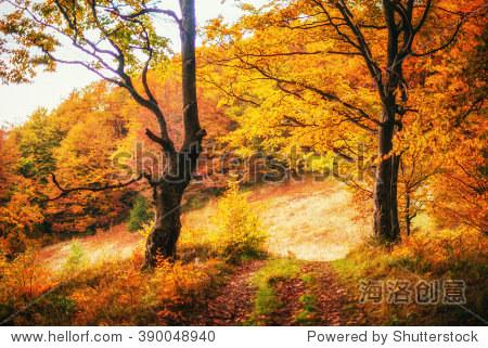秋天的风景.乌克兰.欧洲
