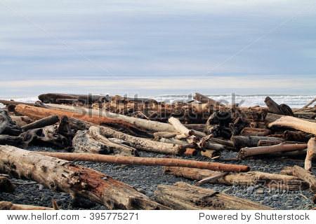 浮木原木海滩