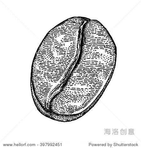 手绘咖啡豆,黑白色背景