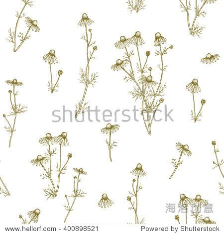 矢量手绘洋甘菊植物无缝模式.