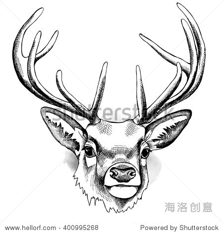 鹿的鹿角.矢量插图.-动物/野生生物,自然-海洛创意,,.