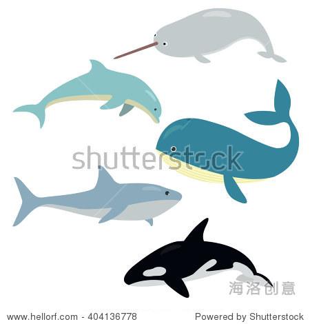 的海洋野生动物:鲨鱼,鲸鱼,海豚,逆戟鲸,独角鲸在孤立