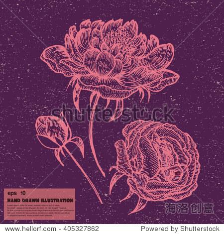 向量的芍药花.手绘插画在平面风格.花卉牡丹画孤立的背景.卡嘟嘟牡丹.