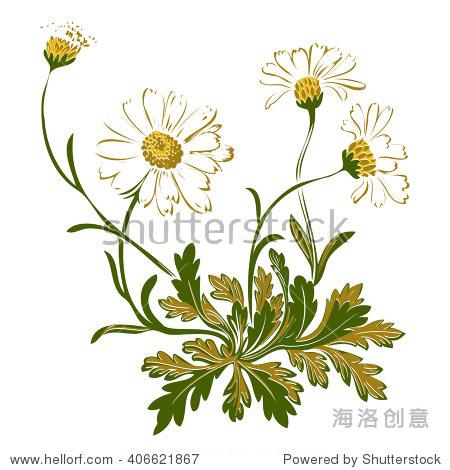 手绘彩色的洋甘菊花束孤立在白色背景.草矢量图