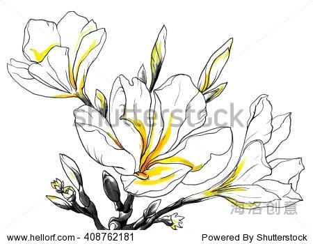 手绘水彩热带花卉与味蕾孤立