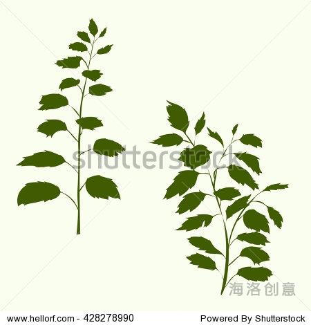 矢量图的绿色白桦树叶,布什分支与新鲜的绿叶孤立在白色背景