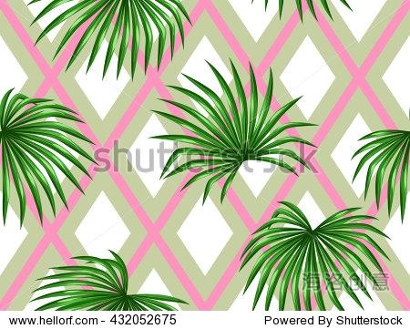 装饰形象热带叶棕榈树livistona rotundifolia.背景没有剪裁面具.